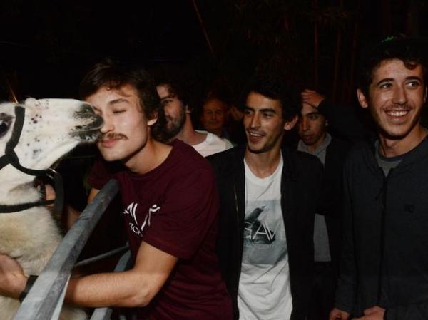 Jovens franceses reencontram lhama que sequestraram e levaram para festa