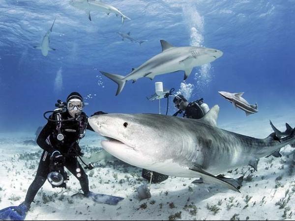 Fotógrafo brasileiro clica de perto as presas do tubarão-tigre