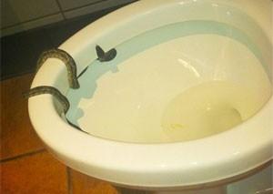 Homem é mordido no pênis por cobras ao usar banheiro público em Gana