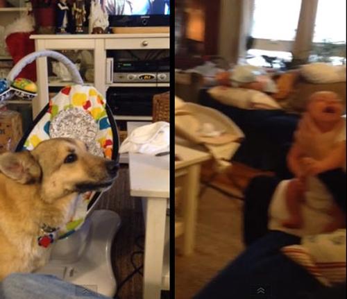 Cão ?conversa? com um bebê chorando e vídeo bomba na web