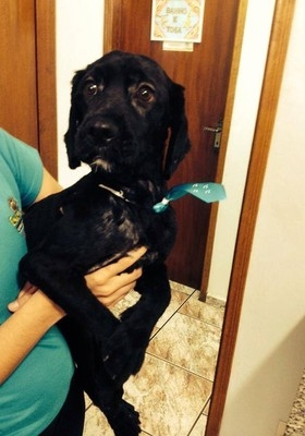 Mulher dá telefone falso para abandonar cão em pet shop e revolta interior de SP