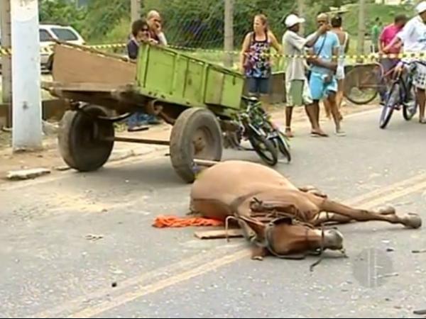 Mulher sem habilitação pega carro escondido e mata ciclista e cavalo