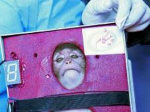 Irã  afirma ter enviado pela segunda vez  macaco ao espaço com sucesso