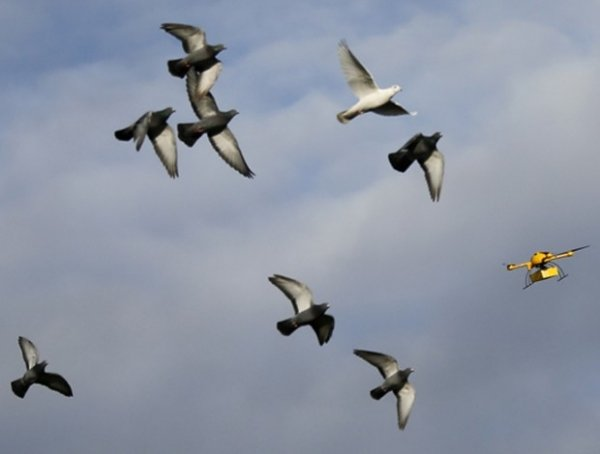 Pombos disputam espaço com drone postal na Alemanha