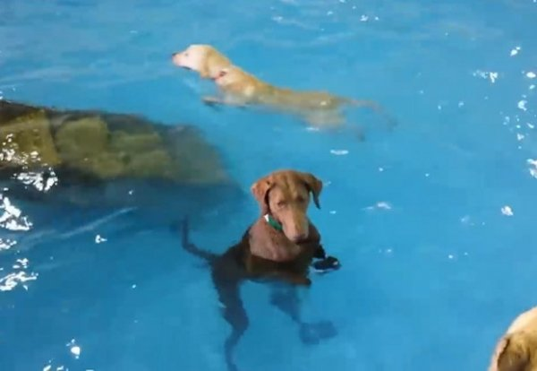 Vídeo de cão que