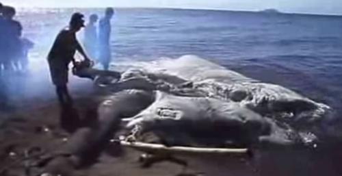 Criatura marinha gigante achada nas Filipinas intriga moradores e peritos