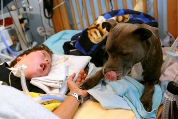 Cão visita garotinho em coma todos os dias e é chamado de