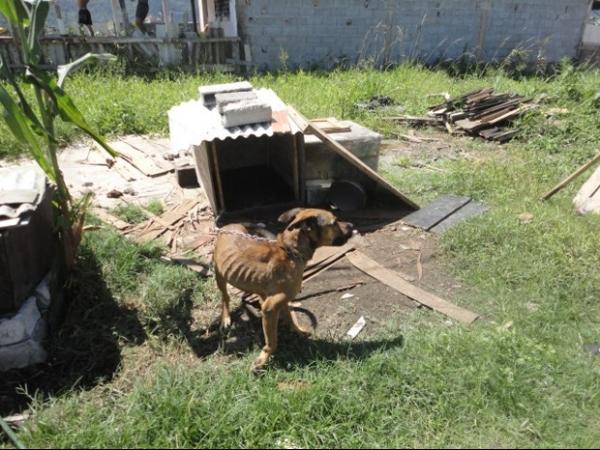Ativistas liberam animais que sofriam maus tratos em Praia Grande, SP