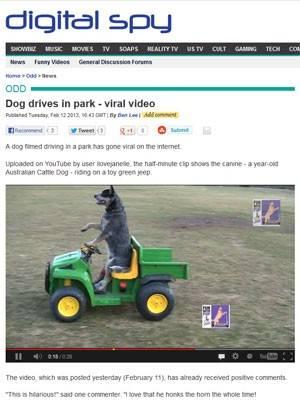 Vídeo de cachorro que dirige em parque ganha destaque na web