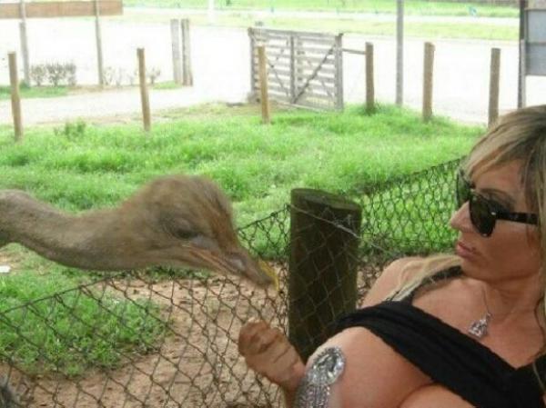 Sabrina Boing Boing alimenta avestruz com seios de fora
