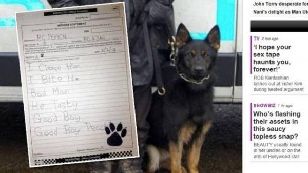 Cão policial é obrigado a â??escreverâ?? e â??assinarâ?? declaração de testemunha para processo