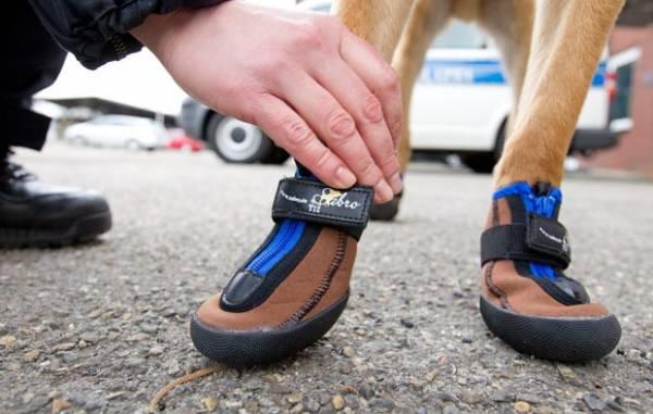 Cães da polícia ganham botinhas para trabalhar em cidade alemã