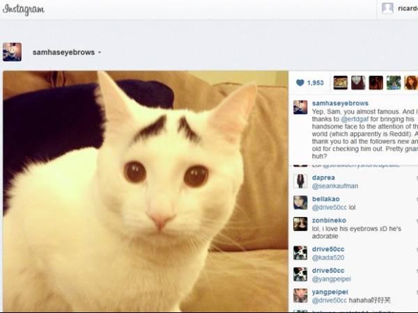 Gato com