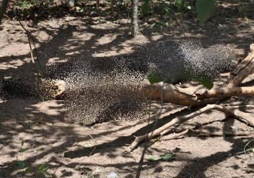 Corpo em avançado estado de decomposição é encontrado em matagal