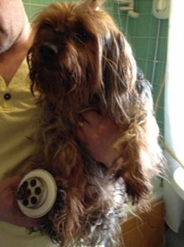 Cadela é resgatada após ficar com pata entalada em ralo de banheira