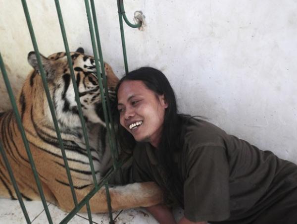 Tigre é mantido como animal de estimação em escola da Indonésia