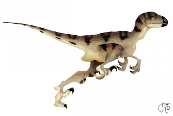 Dinossauro de 1,6 metro de altura é roubado de museu na Austrália