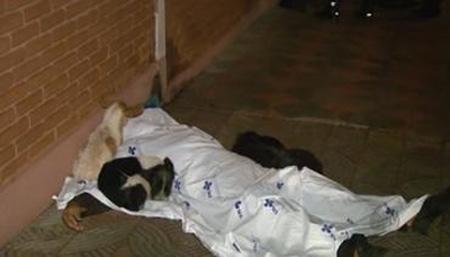 Cachorros velam corpo de andarilho na cidade de Ribeirão Preto-SP