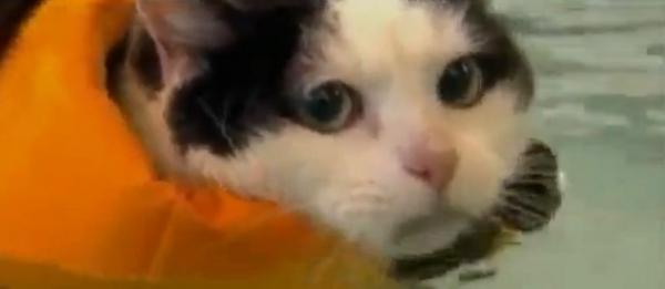 Âncora de TV tem ataque de riso com gato gordo; vídeo!