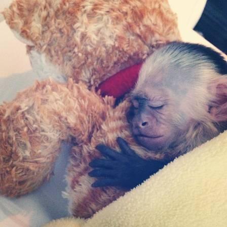 Justin Bieber deixa macaco de estimação para trás para cantar na Alemanha