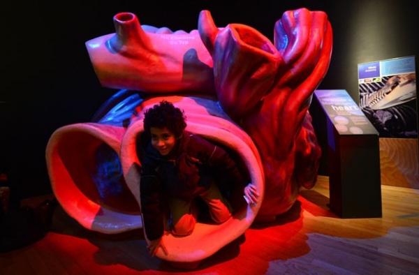 NY: Réplica em tamanho natural de coração de baleia vira atração