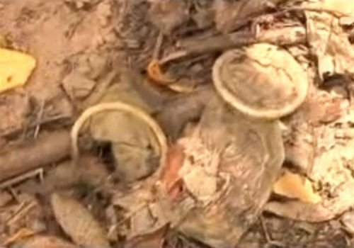Floresta próximo à Raul Lopes vira ponto de prostituição e uso de drogas