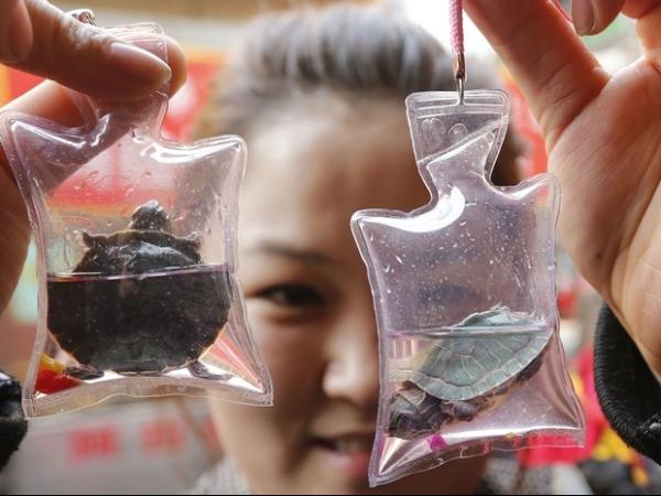Animal vivo em embalagem plástica é vendido como amuleto na China
