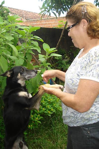 Mulher salva e adota cão amarrado por adolescentes a trilhos de trem