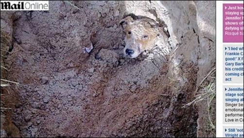 Homem sul-africano se desculpa ao reencontrar cão que enterrou vivo