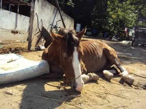 Cavalo usado por charreteiros é sacrificado;