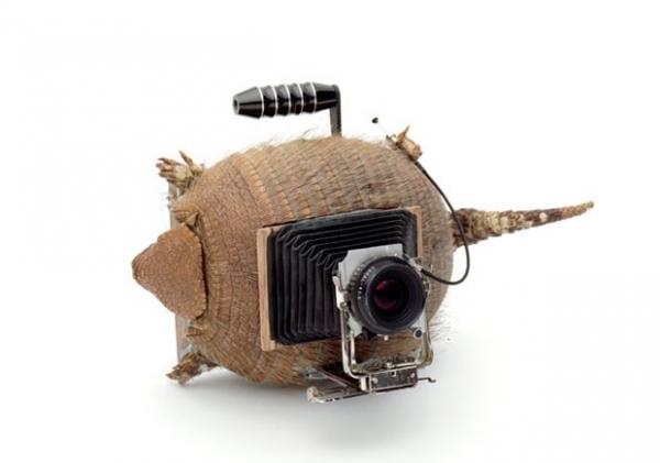 Artistas criam câmeras fotográficas usando casco de tartaruga e tatu