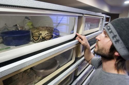 Homem que criou filho junto de cobras tem que se livrar de répteis