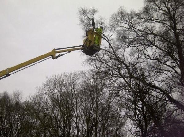 Gato é salvo após passar três dias preso a quase 20 metros em árvore