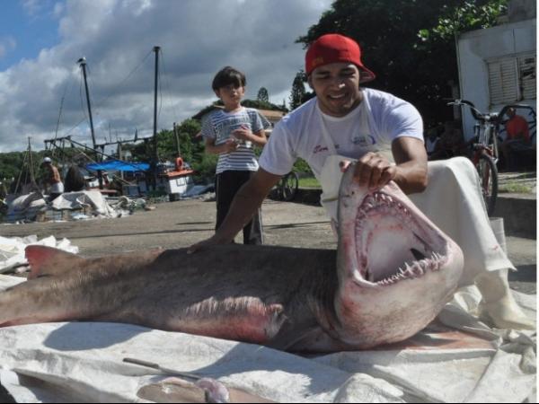 Tubarão de 100 quilos é capturado por rede de pescadores