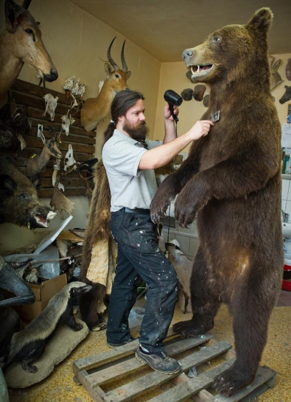 Empresa alemã exibe urso de 2 m e outros animais empalhados
