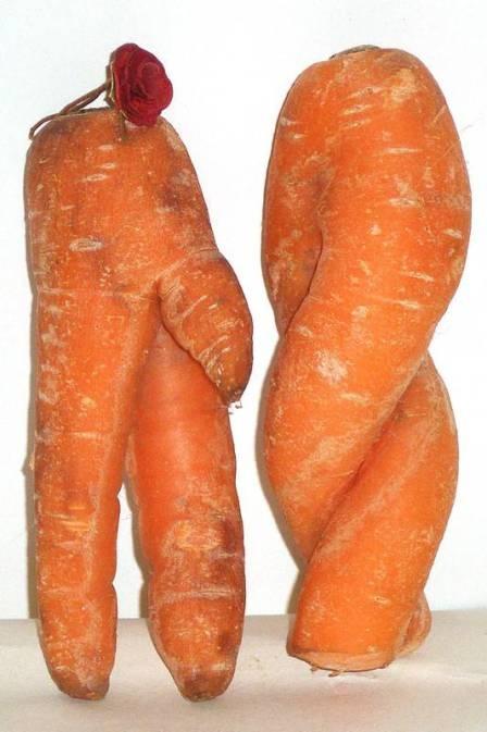 Inglesa encontra cenouras com formas de partes íntimas de mulher e homem Mulher