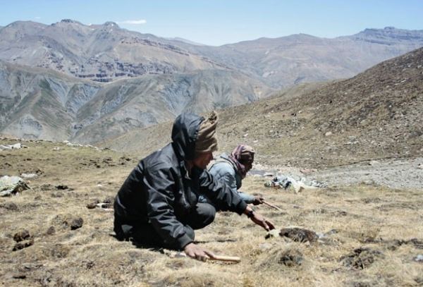 Alunos nepaleses faltam às aulas para procurar
