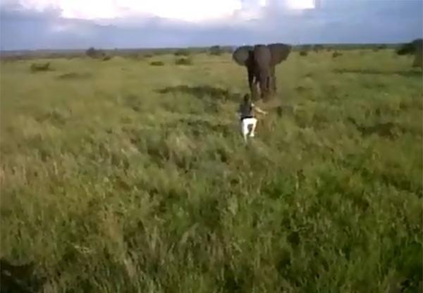 Guia bêbado é demitido por assustar elefante em parque na África do Sul