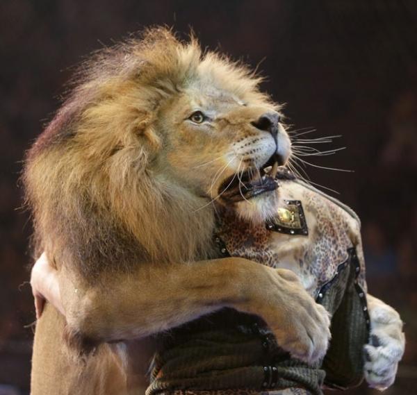 Artista circense dança e põe cabeça na boca de leão