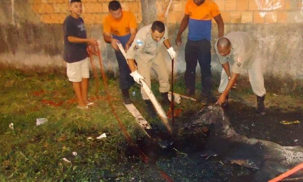 Homens da Defesa Civil salvam filhote de cavalo enterrado até a cabeça em vala