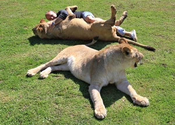 Tcheco mantém leões de estimação que parecem