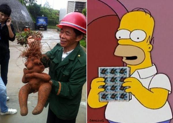 Agricultor chinês colhe raiz que lembra personagem Homer Simpson