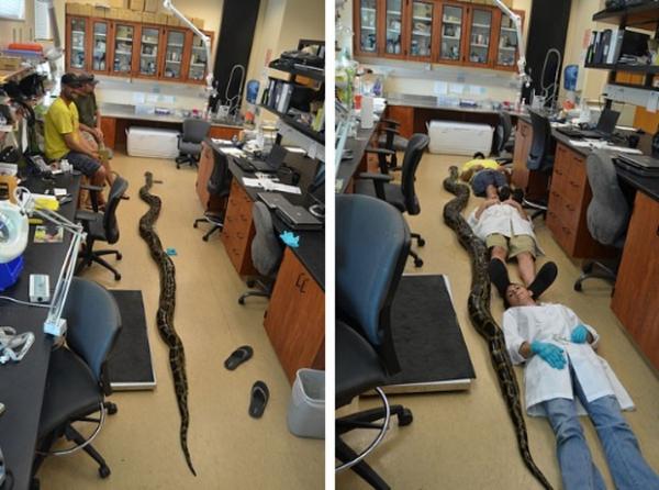 Jovem diz ter lutado por 10 minutos com cobra de 5,69 metros na Flórida