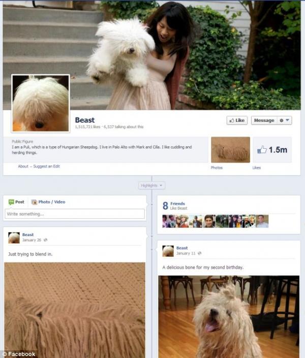 Pesquisa mostra que 10% dos usuários do Facebook não são humanos