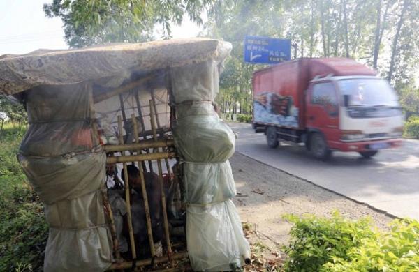 Chinês constrói casa portátil e é apelidado de