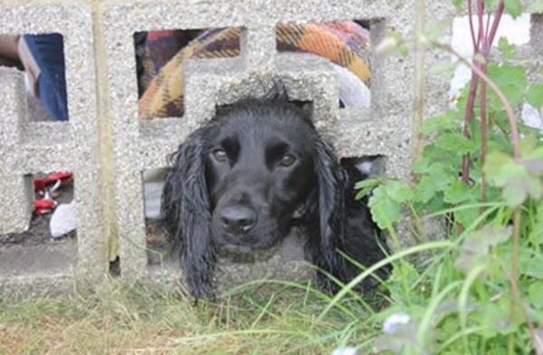 Cão é resgatado após ficar com a cabeça entalada em muro