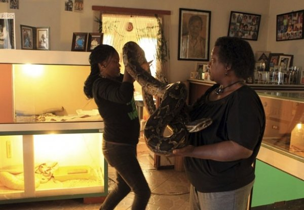 Sul-africana mantém cobras enormes como animais de estimação