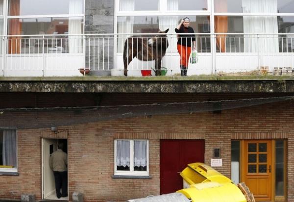 Polícia belga manda retirar burra que vivia em varanda de apartamento