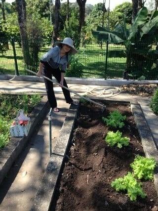 Paula Fernandes posta foto cuidando do jardim:
