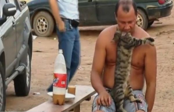 Crueldade: vítimas de maus-tratos, animais levam tiros e até mordidas de agressores
